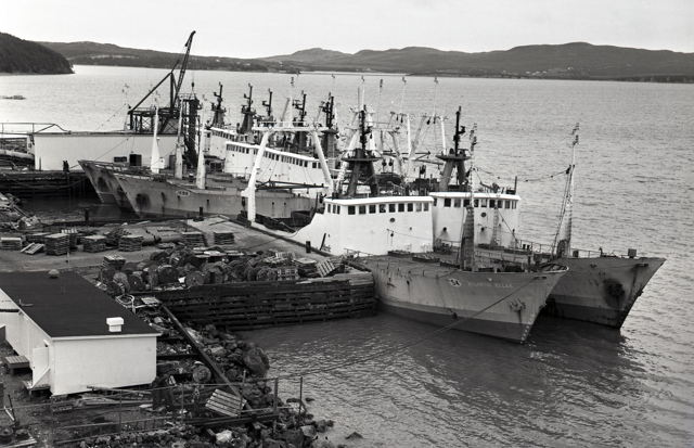 Atlantic Fish Processors Co. Ltd Stern Trawler Fleet at Marystown