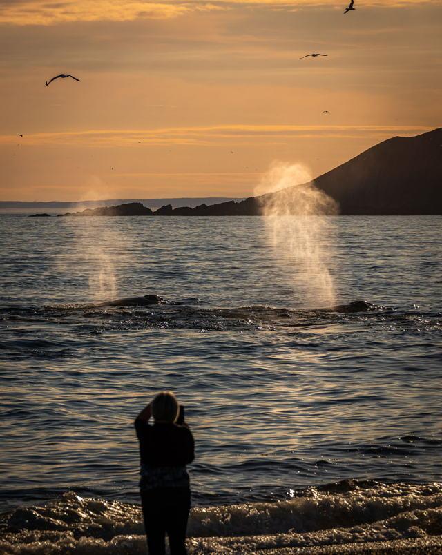 St. Vincents Whales 2