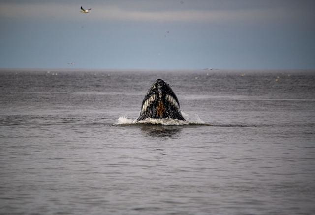 A whale of a beauty