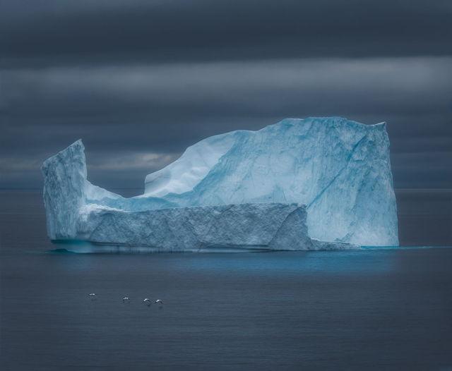 Birds and the Iceberg