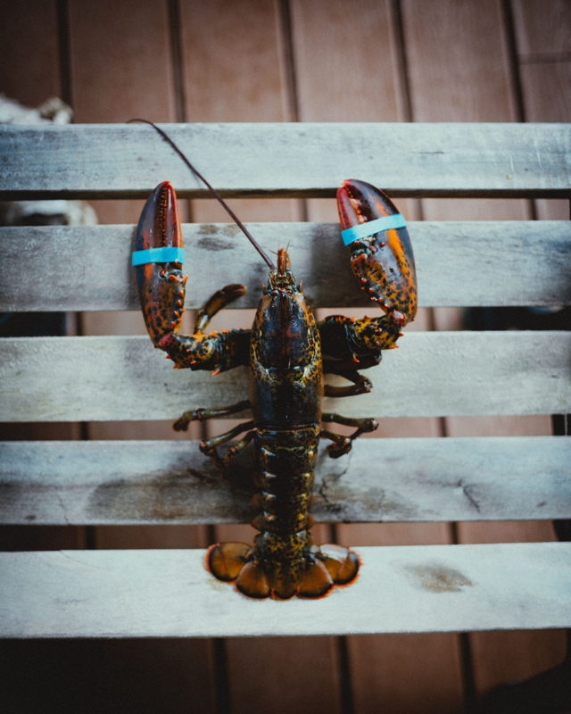 Newfoundland Lobster