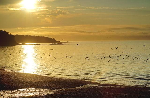 The Golden Beach