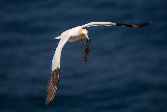 Gannet Flight 3