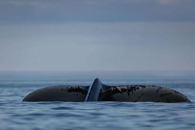 Trinity Whale 1