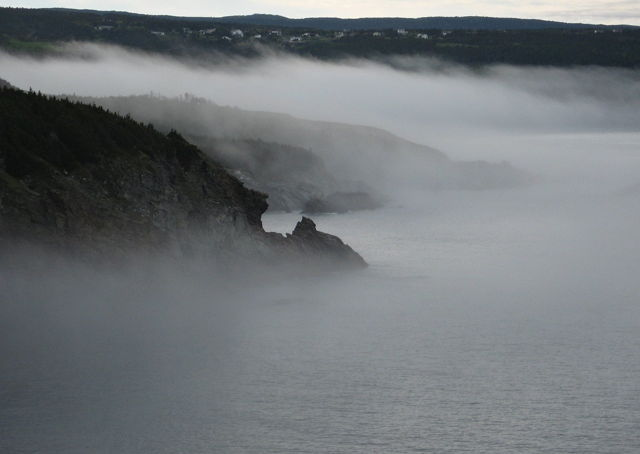 Middle Cove Fog