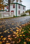 Paved With Autumn