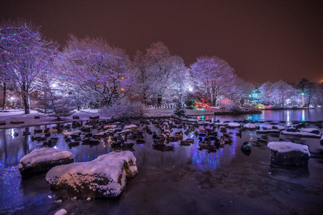 Bowring Park Duck Pond Christmas