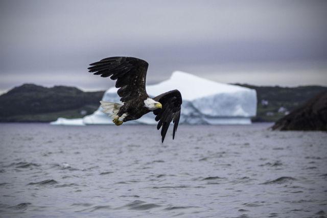 Bald Eagle Iceberg