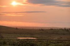 Woodland Caribou Sunrise