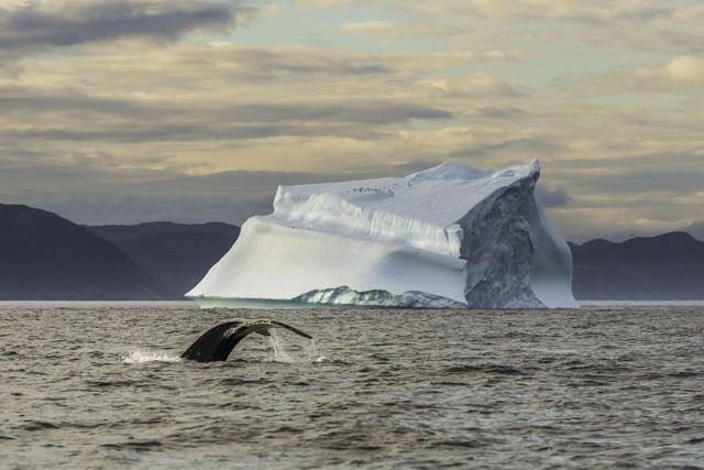 Whale Tail Iceberg