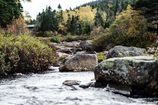 Manuels River