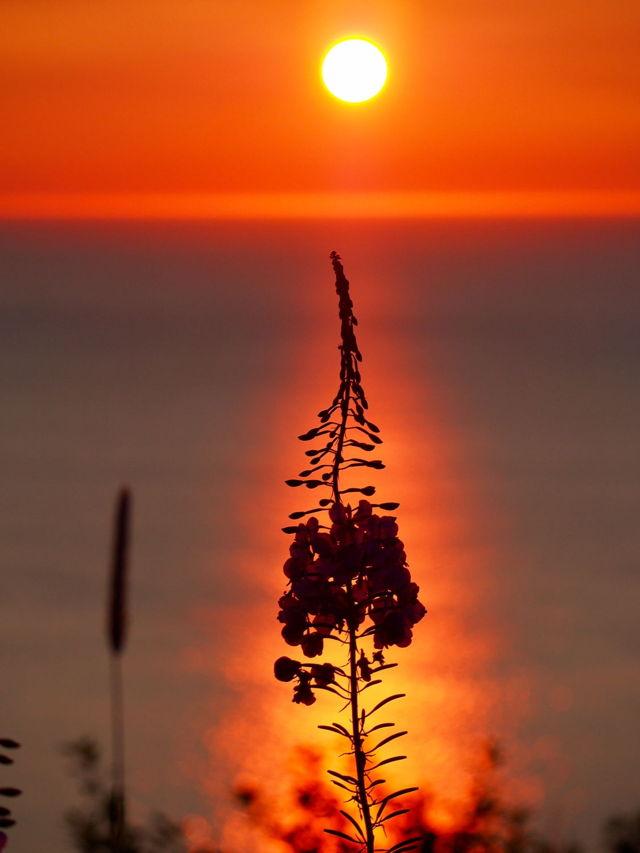 Flower at sunrise