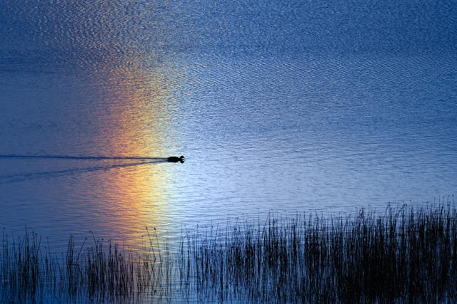 Chamberlains Pond Sun Dog Reflection