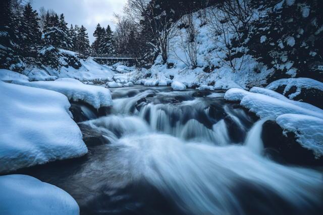 Winter Scene Bowring Park