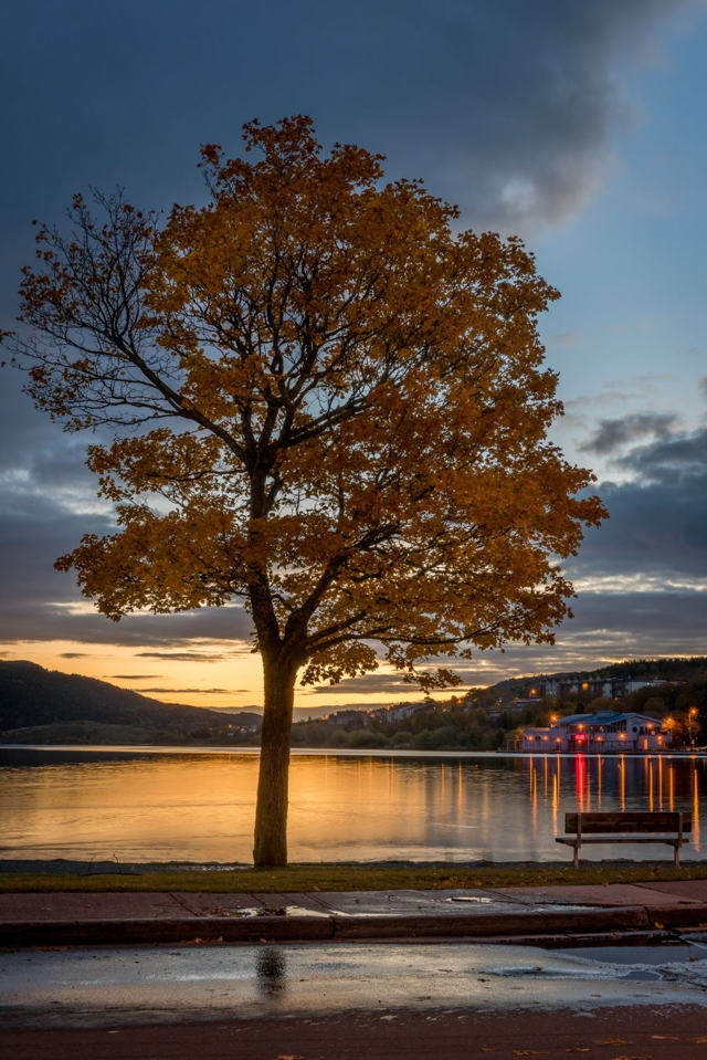 Quidi Vidi lake Autumn