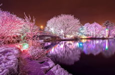 Winter Lights at Bowring Park