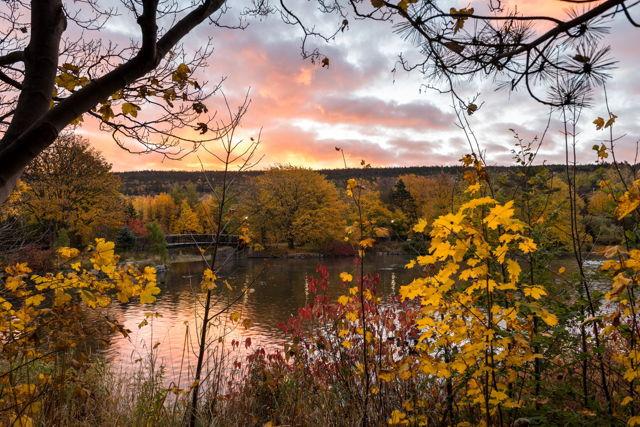 Bowring Park Sunrise 1, St. John's