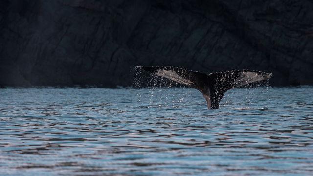 Trinity Whale 4
