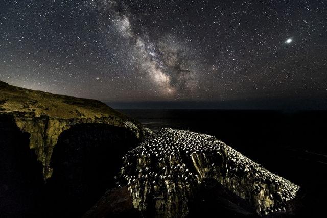 Cape St. Mary's Milky Way