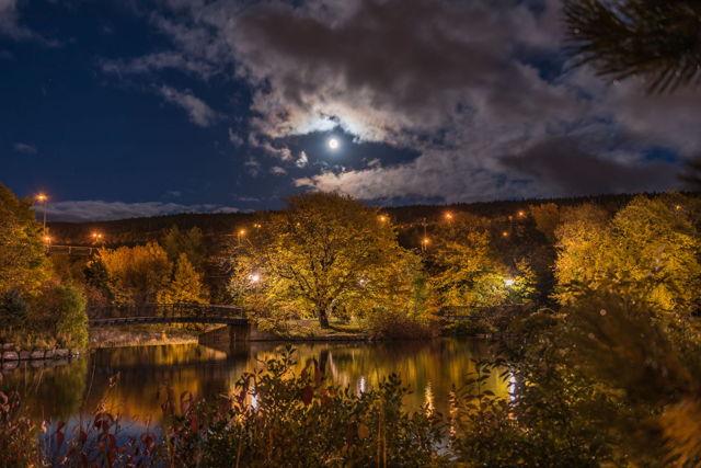 1 Bowring Park Moon