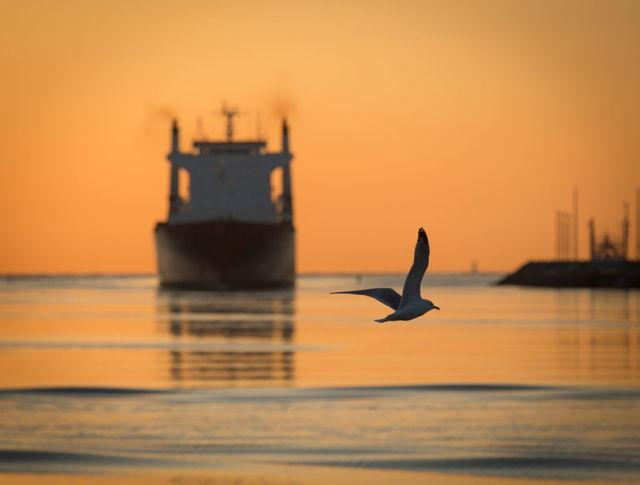 Seagull greets Oceanex Sanderling