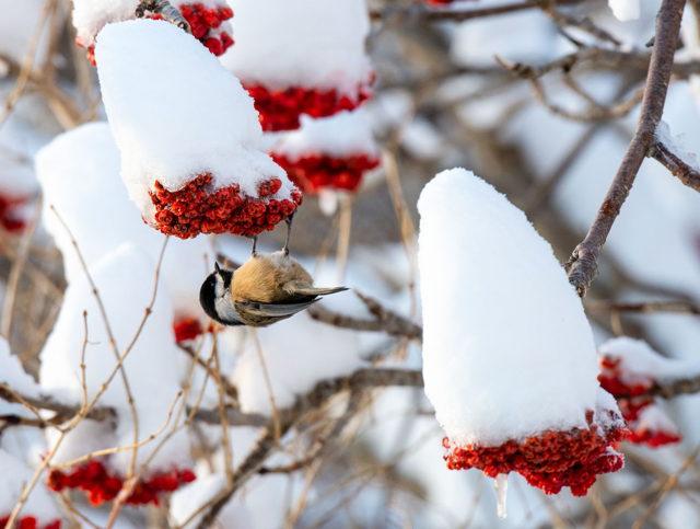 Winter Treat