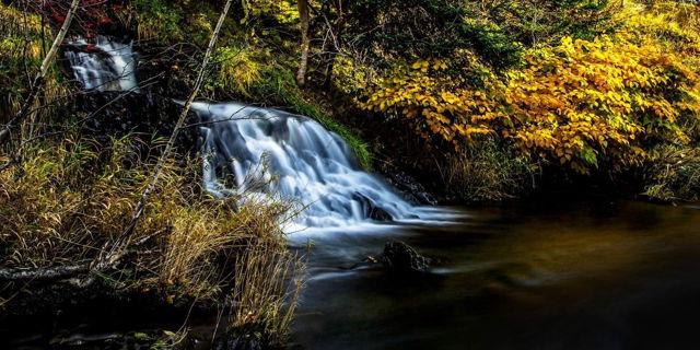 Autumn Falls - St. John's