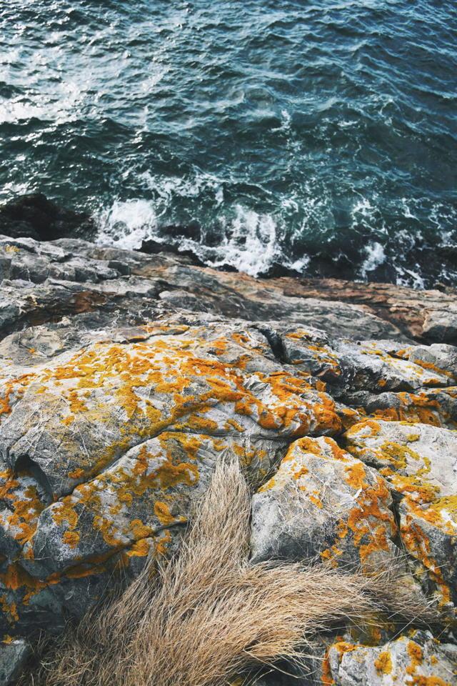 Lichen Covered Cliff