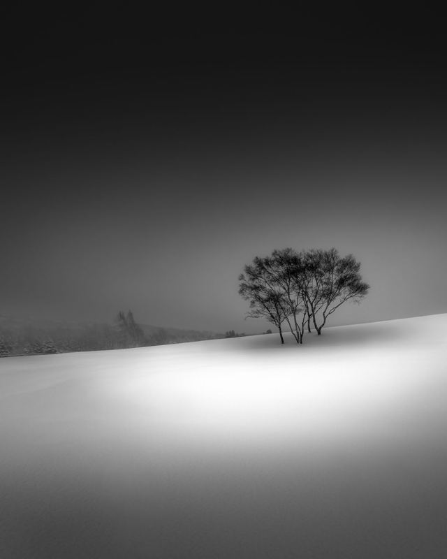 Lone Trees in the Snow Black and White