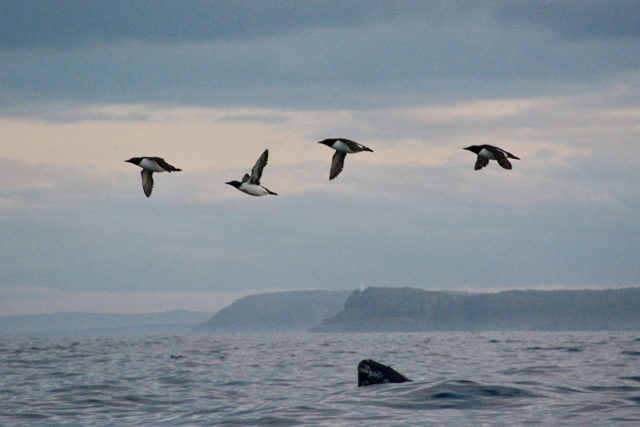 Humpback birdwatching