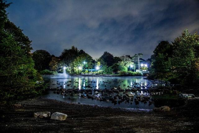 Bowring Park Summer