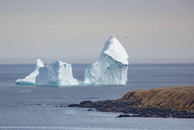 Ferryland Iceberg 4
