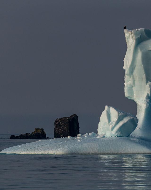 Herring Cove Iceberg and Eagle