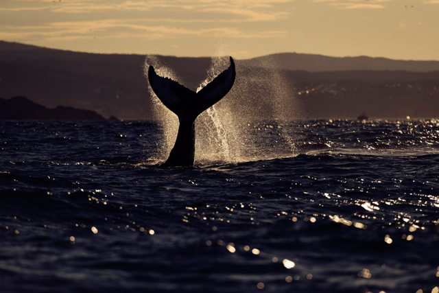 Whale Play 2
