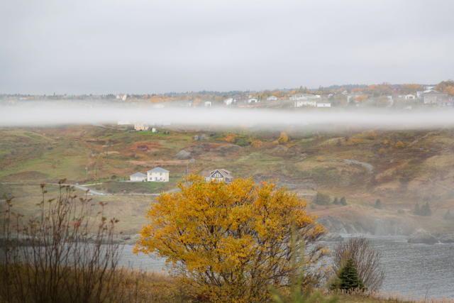 Torbay fog 2