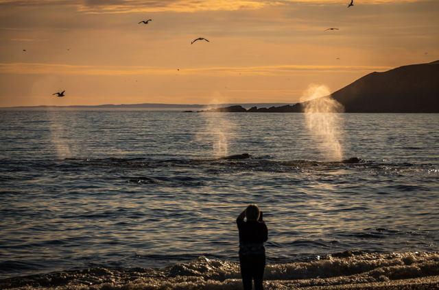 St. Vincents Whales 1
