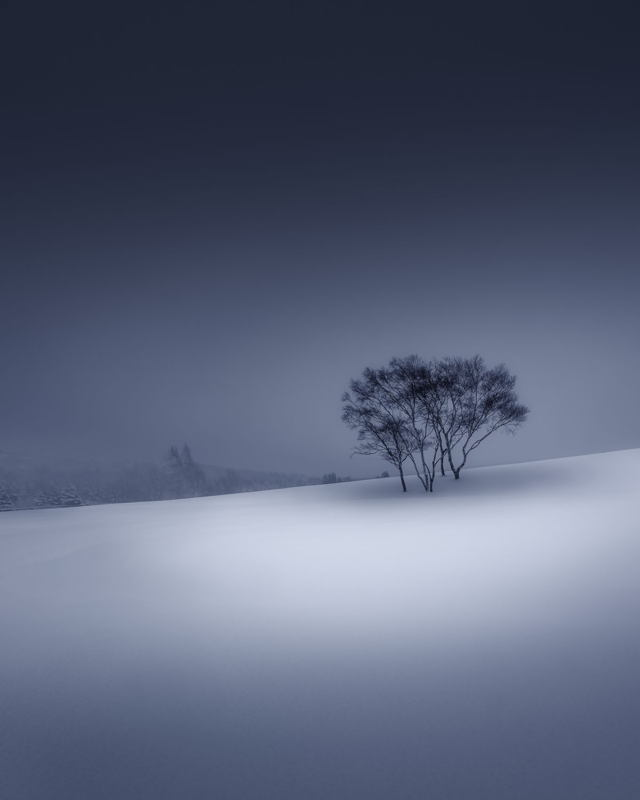 Lone Trees in the Snow