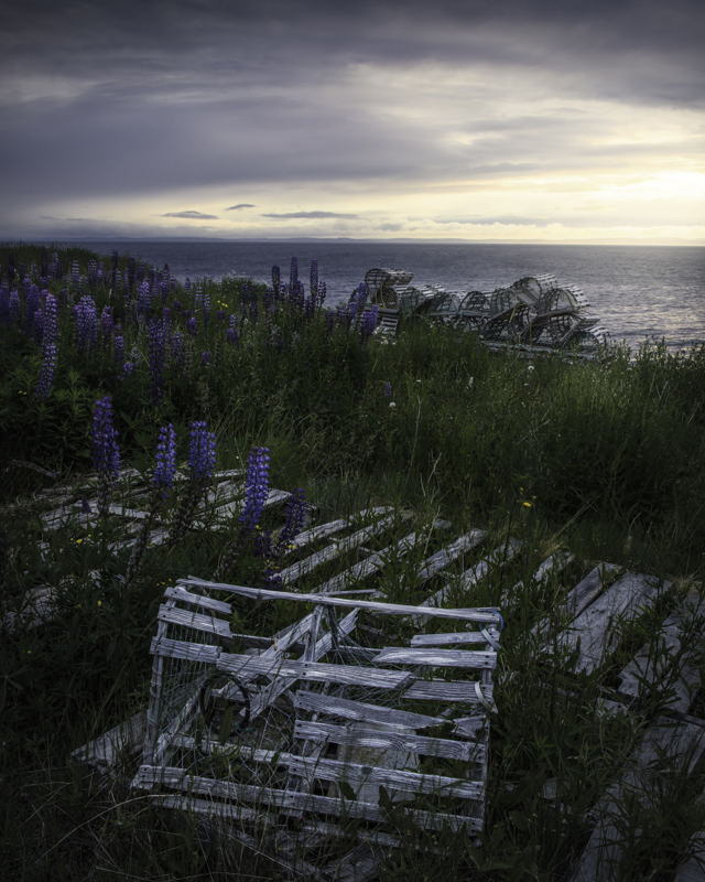 Lobster Pots and Lupins