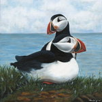 A Pair of Puffins