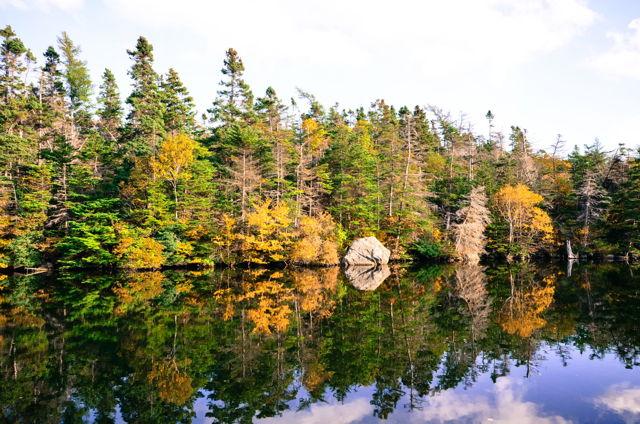 Manuels River, reflection