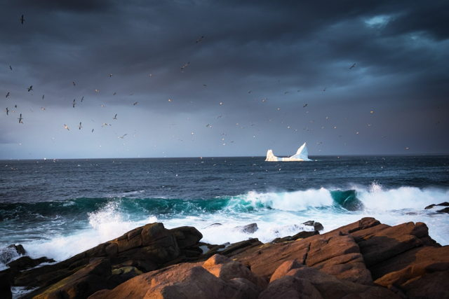 Cape Spear Iceberg and Gannets