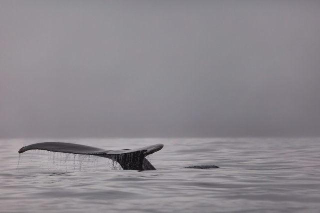 Peaceful Swim