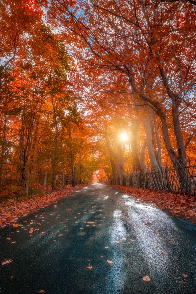 Fall on the Lane