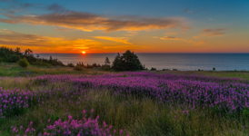 Fire Above and Fireweed Below, Sunrise at Lower Island Cove