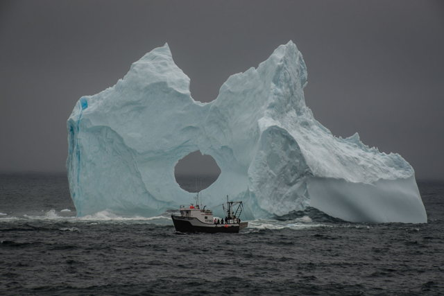 1 ba Renews - Cappahayden Iceberg