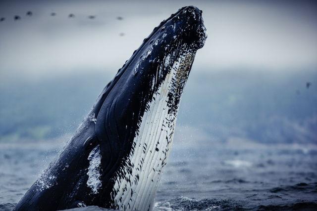 Whale Hello 2