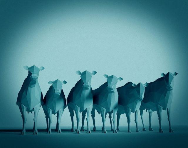 Cows Cyan