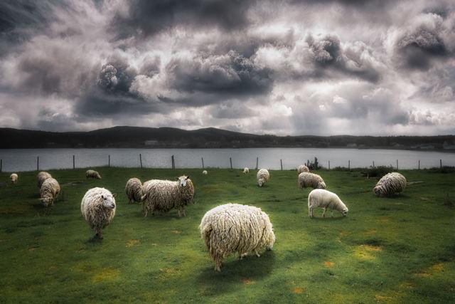 Heaven Pasture