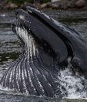 Whales Eye