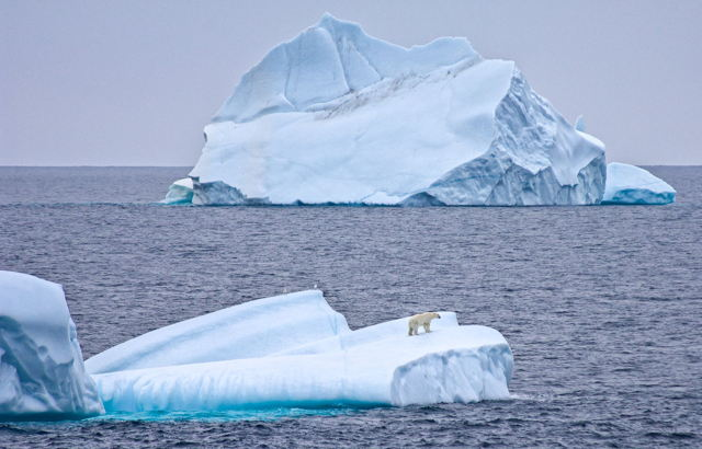 Polar Bear on Iceberg, Baffin Island, Canada
